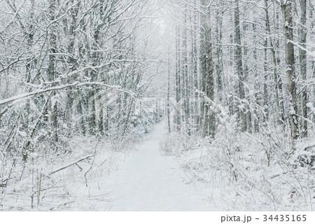 雪の森林、冬の風景。 34435165