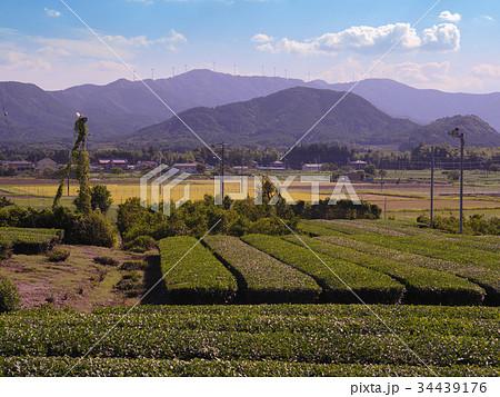 茶畑と風力発電所 三重県度会町 8月 34439176