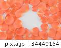 オレンジ オレンジ色 橙の写真 34440164