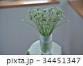 花 ニラ 野菜の写真 34451347