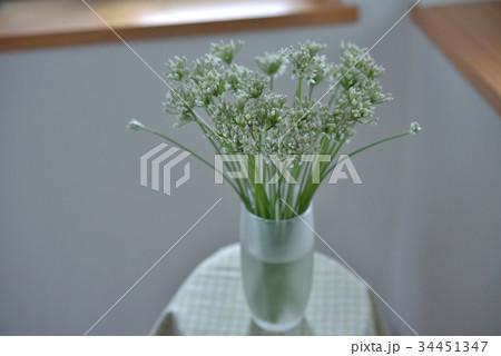 窓辺の花 ニラの写真素材 [34451347] - PIXTA
