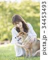 柴犬 女性 若いの写真 34453493
