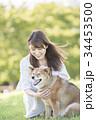 柴犬 女性 若いの写真 34453500