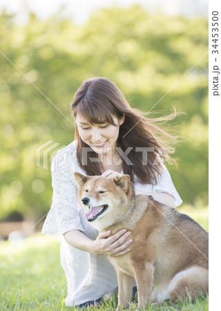 若い女性と柴犬 34453500