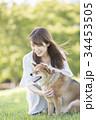 柴犬 女性 若いの写真 34453505