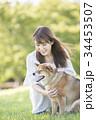 柴犬 女性 若いの写真 34453507