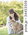 柴犬 女性 若いの写真 34453509