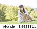 柴犬 女性 若いの写真 34453511
