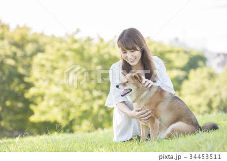 若い女性と柴犬 34453511