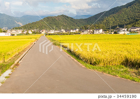 A country road and fields with blue sky  34459190