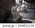 紹興の猫 34462138