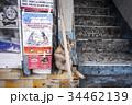 香港の猫 34462139