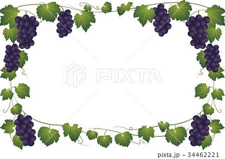 ぶどうとつるのフレームのイラスト素材 34462221 Pixta