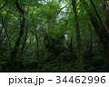 屋久島 苔 自然の写真 34462996