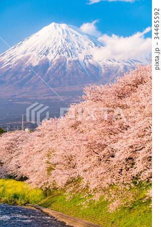 静岡県》富士山・桜の名所龍巌淵...