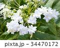 隅田の花火 34470172