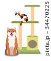 キャットタワーと猫と犬 34470225