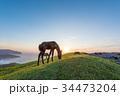 都井岬 御崎馬 馬の写真 34473204