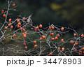 キジバト 鳥 柿の写真 34478903