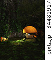 Gnome Toadstool House in the Forest at Night 34481917
