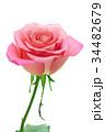 薔薇 バラ 花の写真 34482679