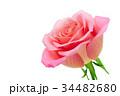 薔薇 バラ 花の写真 34482680