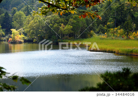 初秋の八幡平 色づき始めた秋の大沼 34484016