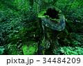 三段峡 広島 切り株の写真 34484209