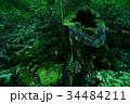 三段峡 広島 切り株の写真 34484211