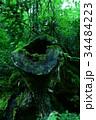 三段峡 広島 切り株の写真 34484223