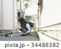 女子高生 猫 登下校 34486382