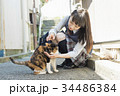 女子高生 猫 登下校 34486384