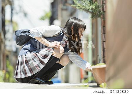女子高生 登下校 しゃがむ 34486389