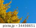 銀杏 34498651