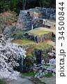 石垣 春 桜の写真 34500844