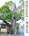 島田市 大木 巨樹の写真 34501816