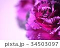 葉牡丹 葉 クローズアップの写真 34503097