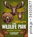 動物 野生動物 スケッチのイラスト 34503677