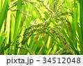 稲 稲穂 秋の写真 34512048