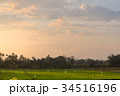 Northern Thailand green field landscape in morning 34516196