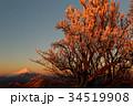 富士山 朝焼け 樹氷の写真 34519908