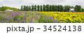 北海道 富良野 満開の写真 34524138