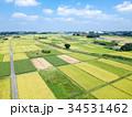 空撮 見沼田んぼ 田んぼの写真 34531462