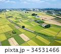 空撮 見沼田んぼ 田んぼの写真 34531466