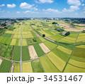 空撮 見沼田んぼ 田んぼの写真 34531467