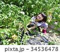 大根 収穫 女の子の写真 34536478