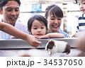 家族 動物 ふれあい 34537050