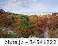京都市 秋 葉の写真 34541222
