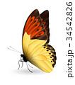 チョウ 蝴蝶 蝶のイラスト 34542826