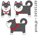 柴犬 犬 黒柴のイラスト 34545189